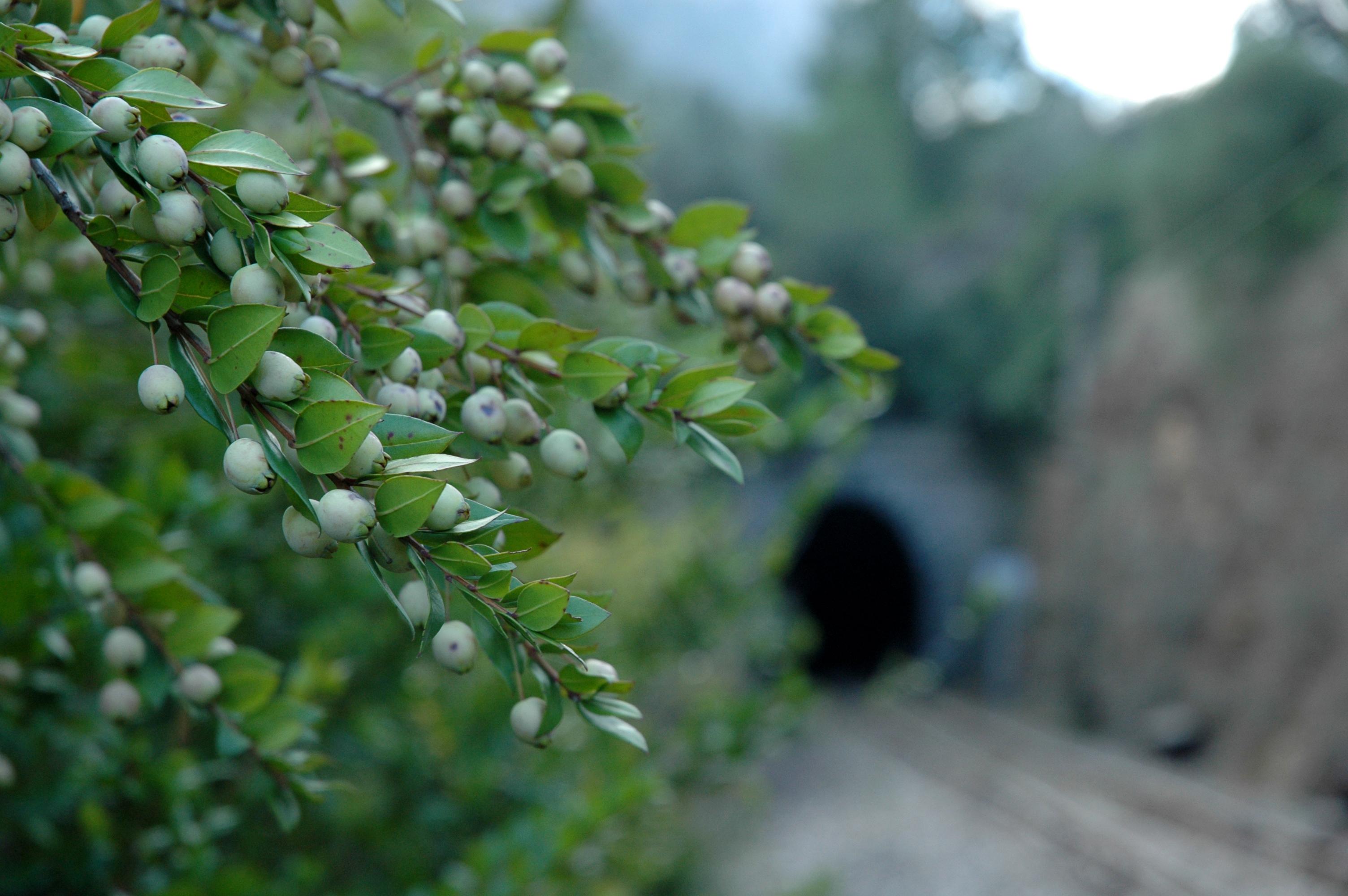 Oleocultura: ¡Vive la naturaleza y tradición con los 5 sentidos!